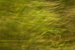 Green grass at summer background or texture stock photography