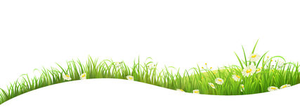 Green grass summer banner. Summer banner with green grass and flowers, vector illustration Stock Images