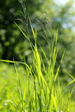 Green grass. Summer bright green drass is so beautiful on sunshine stock image