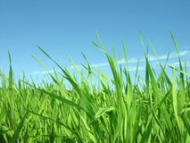 Green grass. Summer day. Blue sky stock images