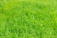 Green grass on summer field, texture, background. Green grass on summer field, texture background royalty free stock image