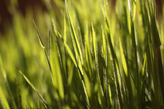 Green grass in the sun. Intensive green grass in the sun stock image