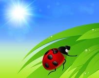 Green grass, sun and ladybird Royalty Free Stock Image