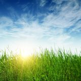 Green grass and sun rays. On sky background Royalty Free Stock Image