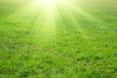 Green grass and sun rays. In background Royalty Free Stock Image