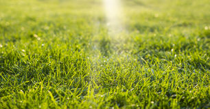 Green grass with sun rays Stock Images