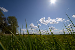 Green grass and sun, rural landscape Royalty Free Stock Images
