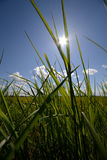 Green grass and sun, rural landscape Royalty Free Stock Photo