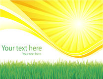 Green grass and sun spring background Stock Photography