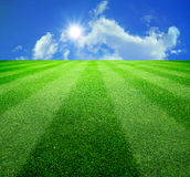 Green grass and sun Stock Images