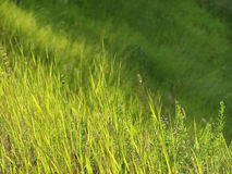 Green grass and sunlight. Green grass on the hill and sunlight Royalty Free Stock Photos