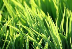 Green grass and sunlight Stock Photography
