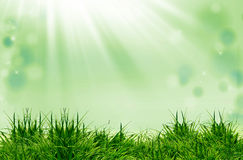 Green grass  and sunlight Royalty Free Stock Photography