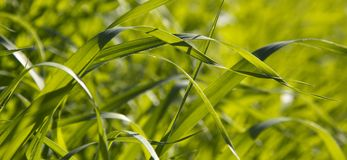 Green grass on sunlight background. Spring Green grass  on sunlight background.May be used for conceptual spring template Royalty Free Stock Photography
