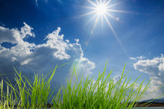 Green  grass with sunlight Royalty Free Stock Photos