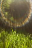 Green grass in the sunlight Stock Image