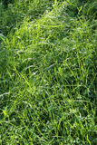 Green grass and sunlight Royalty Free Stock Images