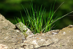 Green grass in sunlight and stone rock Royalty Free Stock Photos