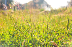 Green grass and sunlight, very shallow depth of field Royalty Free Stock Photos