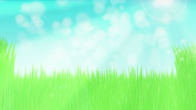 Green grass in sunny afternoon stock video