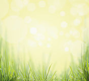 Green Grass on sunny boken nature background Royalty Free Stock Photography