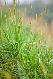 Green grass in a sunny day Stock Photos