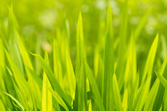 Green grass a sunny day, abstract ecological background. Royalty Free Stock Images