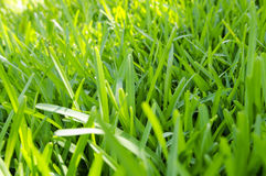 Green grass in a sunny day Stock Photo