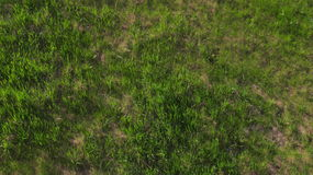 Green grass in sunny day stock photo