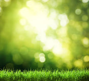 Green grass in sunny Stock Photography