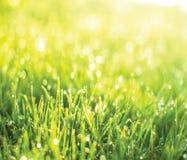 Green grass sunrise Royalty Free Stock Photography