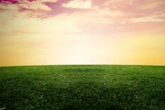 Green grass and sunrise sky Royalty Free Stock Photography