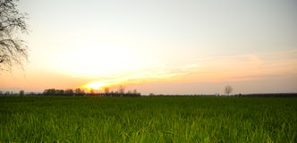 Green grass on the sunset stock photo