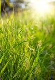 Green grass sunset Royalty Free Stock Photos