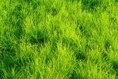 Green grass and sunset Royalty Free Stock Photos