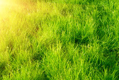 Green grass and sunset Royalty Free Stock Photography