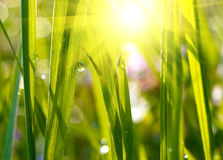Green grass sunset Royalty Free Stock Photo