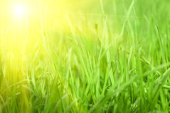 Green grass sunset Stock Image