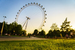 Green grass with London Eye Royalty Free Stock Photography