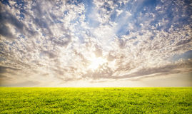 Green grass and sunset sky background Royalty Free Stock Photography
