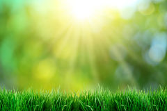 Green grass with sunset views. Royalty Free Stock Images