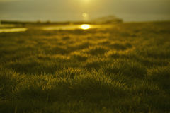 Green grass with sunset views Royalty Free Stock Photos