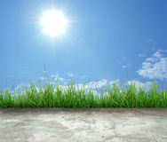 Green grass and sunshine Stock Photo