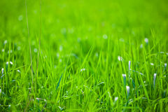 Green grass in the sunshine Stock Image