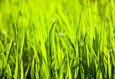 Green grass in the sunshine Stock Images