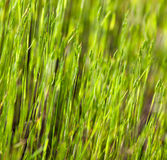 Green grass in the sunshine Royalty Free Stock Images