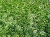 Green grass in sunshines Stock Photo