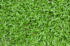 Green grass surface. Surface details of green grass Royalty Free Stock Images