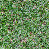Green grass surface Stock Images