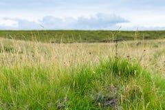 Green grass on surface of Dyrholaey promontory. Travel to Iceland - green grass on surface of Dyrholaey promontory near Vik I Myrdal village on Atlantic South stock images